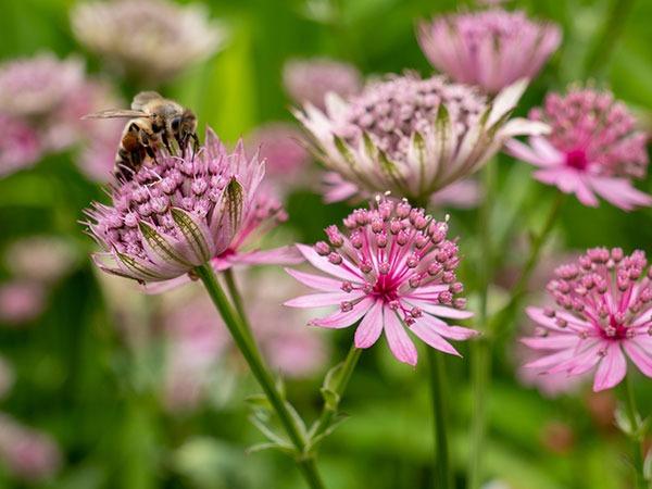 Samenpaket Bienenstauden - Insektenfreundlicher Pflanzenversand How to Tutorial